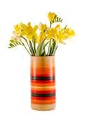 Narcisos y flores amarillos en un florero coloreado vivo, cierre de las fresias para arriba, fondo aislado, blanco Imagen de archivo