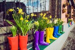 Narcisos y jacinto amarillos en las botas de goma multicoloras usadas como potes que adornan la ventana del escaparate Foco selec Fotografía de archivo libre de regalías