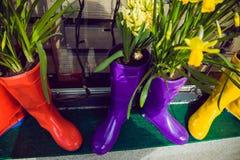Narcisos y jacinto amarillos en las botas de goma multicoloras usadas como potes que adornan la ventana del escaparate Foco selec Imagen de archivo