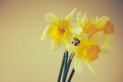 Narcisse Photographie stock libre de droits