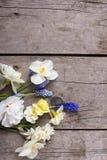 Narcisse de ressort et fleurs colorés de muscaries Photo libre de droits