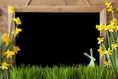 Narcisse de ressort, lapin, l'espace de copie Photographie stock