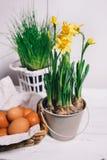Narcisse et oeufs jaunes photos libres de droits
