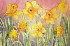 Narcisse jaune dans un environnement herbeux Photos stock