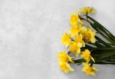 Narcisse jaune sur un fond texturisé blanc Photographie stock