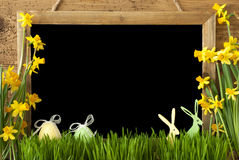 Narcisse, oeuf de pâques, lapin, l'espace de copie Images stock