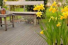 Narcisse sur la terrasse photographie stock