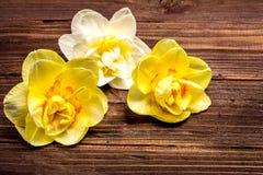 Narcissen en gele narcissen op een bruine raad Royalty-vrije Stock Fotografie
