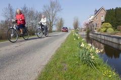Narcissenbloemen aan kant van weg in groen hart van Holland Stock Foto's