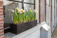 Narcissenbloemen op vensterbank in Amsterdam Royalty-vrije Stock Afbeeldingen