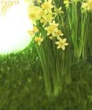 Narcisses com espaço fotos de stock