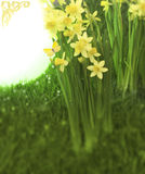 Narcisses with space. Bunches of the spring flower narcissus are standing around a shining orb, that is fading into absolute white and has a ornament in the stock photos