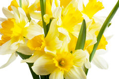 Narcissi Stock Images