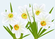 Narcissi and blue sky Stock Photography