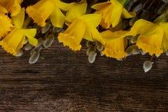 Narcissus весны с catkins Стоковое Изображение RF