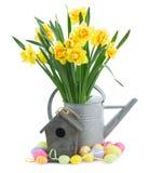 Narcissus весны стоковые фото