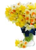 Narcissus в вазе Стоковое Изображение RF