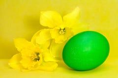 narcissus зеленого цвета пасхального яйца Стоковое Изображение