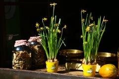 Narcissus и высушенные грибы в Праге Стоковые Фото