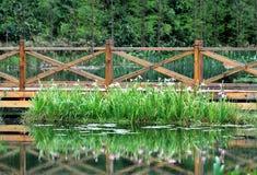 Narcissus и деревянный путь Стоковое Фото