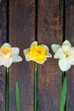 Narcissus на деревянной предпосылке Стоковое Фото