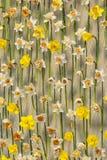 Narcissus на сети металла стоковое изображение