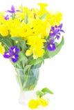 Narcissus, тюльпаны и радужки весны Стоковое фото RF