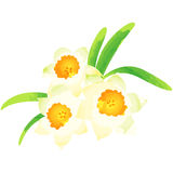 Narcissus - birth flower vector illustration in watercolor paint Royalty Free Stock Photo