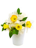 Narcissus bouquet Stock Photos
