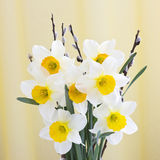Narcissus bouquet Royalty Free Stock Image