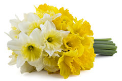 Narcissus bouquet Royalty Free Stock Images