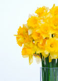 Narcissus Bouquet Stock Image