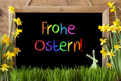 Narcissus, Bunny, Colorful Frohe Ostern Means Happy Easter Stock Image