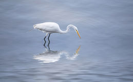 A Narcissus Crane Royalty Free Stock Image
