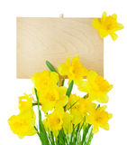 Narcissus ( Daffodil ) and Empty Sign for message / isolated Royalty Free Stock Photography