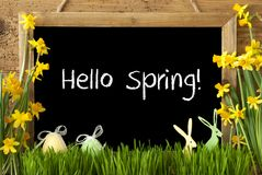 Narcissus, Easter Egg, Bunny, Text Hello Spring Stock Photo