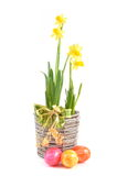 Narcissus and easter eggs Stock Photography
