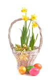 Narcissus and easter eggs Stock Image