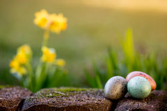 Narcissus and easter eggs Royalty Free Stock Images