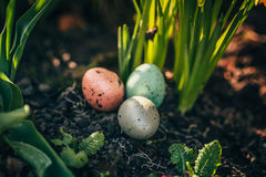 Narcissus and easter eggs Stock Photos