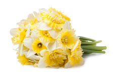 Narcissus flower Stock Photo