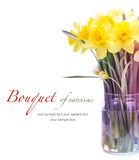 Narcissus flower bouquet Royalty Free Stock Photos