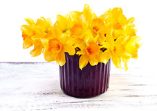 Narcissus flower in pot  on white background Stock Images