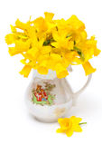 Narcissus flower in vase Stock Images