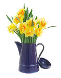 Narcissus flowers in blue pot Royalty Free Stock Photo
