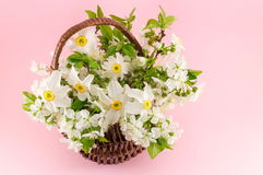 Narcissus flowers bouquet on pink background royalty free stock photo