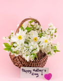 Narcissus flowers and Happy Mothers Day note. On pink background Royalty Free Stock Photo