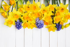 Narcissus flowers and hyacinths over white wooden background Royalty Free Stock Image