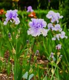 Flower garden at the city park Royalty Free Stock Photography