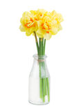 Narcissus flowers posy in vase. With pink gift box  isolated on white background Royalty Free Stock Photo